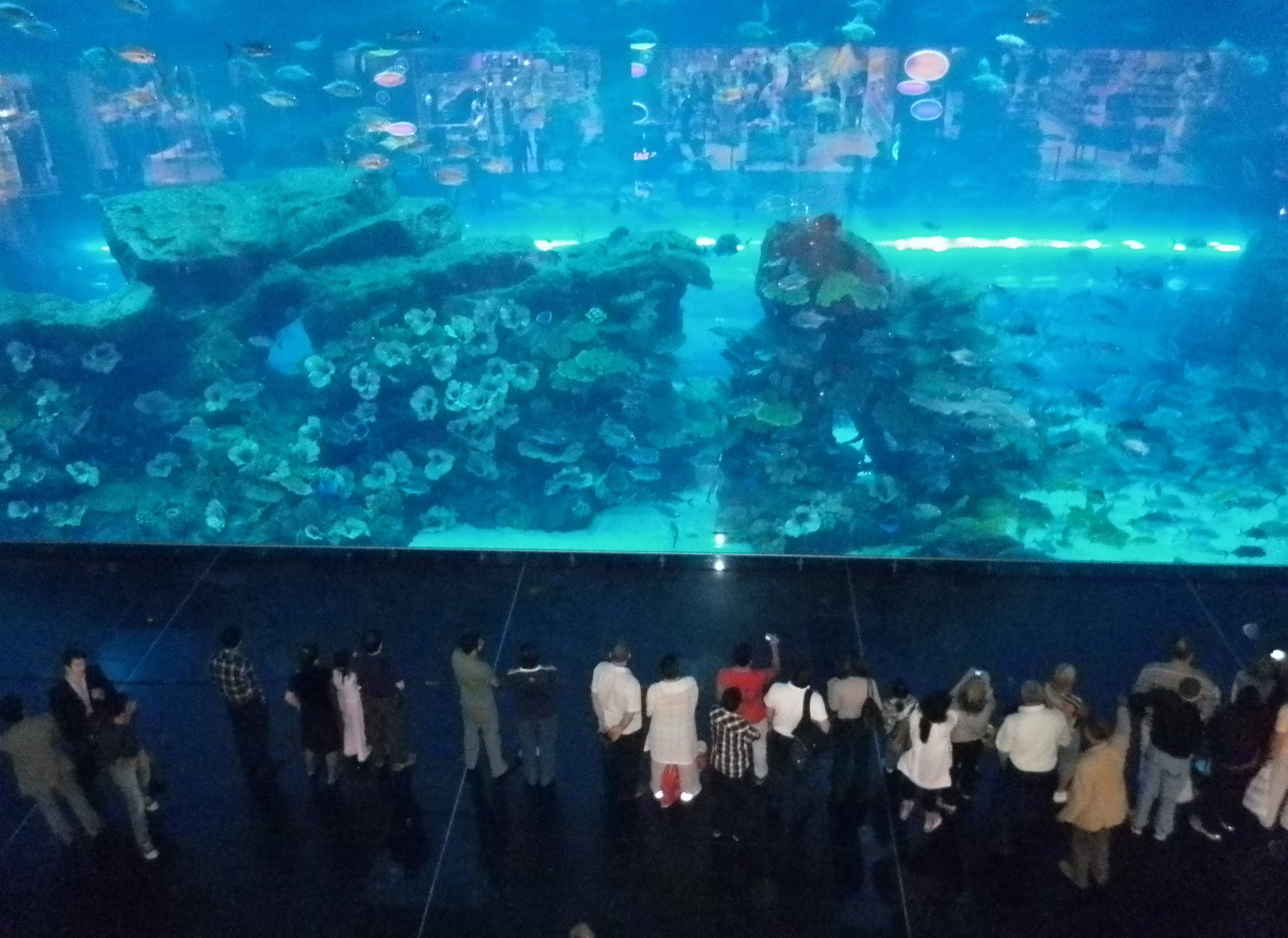 100 Bill Gates Aquarium In House Amazing Facts About The Octopus Business Insider A Peek